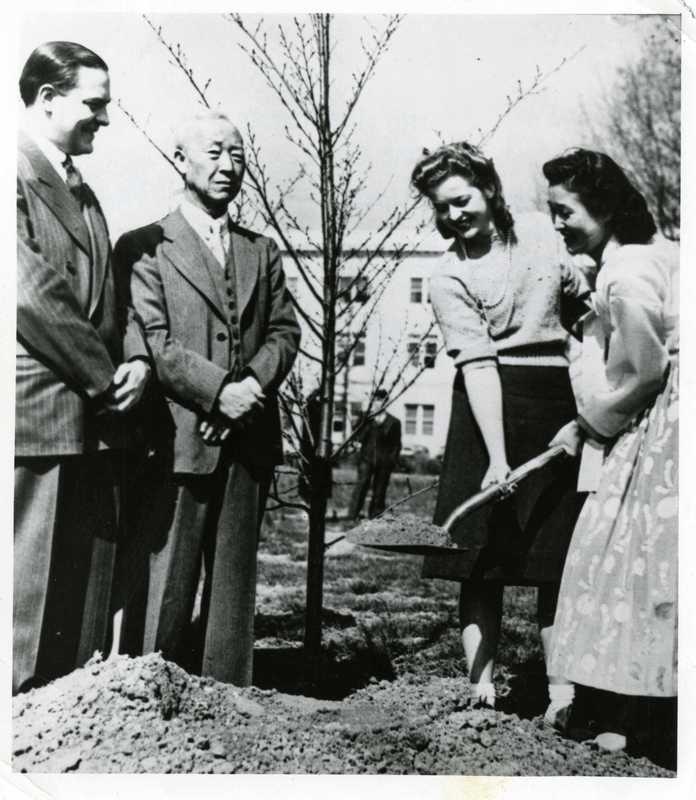 Korean Cherry Trees Planting Ceremony